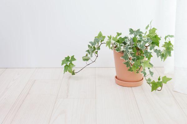 PLANTAS PARA A  DECORAÇÃO DA TUA CASA